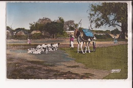 Somalie Le Visage Du Pays Somal Reir Goura A Dabolak Chameau Chevres Goat - Somalia