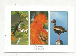 Cp, GUYANNE ,animaux ,oiseaux, Colibri ,coq De Rocher Et Dendrocygne , Photo T. Montford , écrite - Guyane