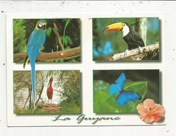 Cp, GUYANNE ,animaux ,oiseaux, Ara , Toucan, Ibis , Morpho , Voyagée - Guyane