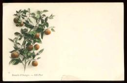Branche D' Oranger - 59 - (Très Beau Plan) - CP Très Ancienne, Avant 1904. - Fleurs