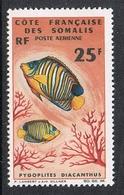COTES DES SOMALIS AERIEN N°50 N**  Poisson - Nuovi