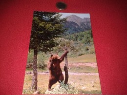 SPAIN. POSTAL POST CARD CARTE POSTALE Nº 5 HECHO PIRINEO ARAGONÉS OSO OURS ANIMALES BEAR EDICIONES SICILIA VER FOTO/S - Osos