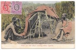 Uganda, Registered Postcard 1912 White Ant Hill - Boys Catching Ants - Uganda