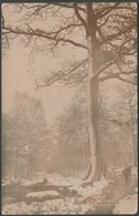 Ecclesall Wood, Sheffield, Yorkshire, 1904 - RP Postcard - Sheffield