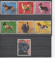 PARAGUAY - Faune - Chiens : Berger Allemand, Springel Spaniel Gallois, Berger Islandais, Boxer Fauve, Terrier écossais - Paraguay