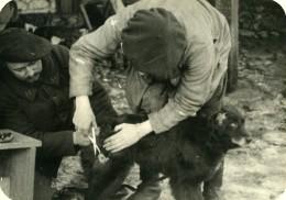 France WWI Soins à Un Chien De Tranchée Veterinaire Ancienne Photo 1917 - Guerre, Militaire