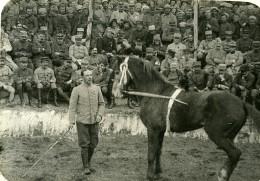 France WWI Sur Le Front Cirque Militaire Dressage De Chevaux Ancienne Photo 1917 - War, Military
