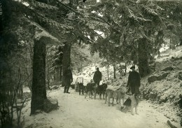 France WWI Alsace Traineaux Militaires à Chiens Scene D'Hiver Ancienne Photo 1917 - War, Military