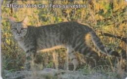Namibia, NMB-014,  African Wild Cat. - Namibia