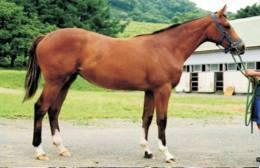 Horses Breeds - Karabakh Postcard Collector - Caballos