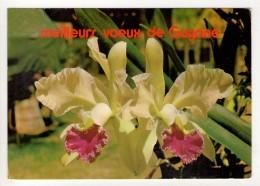 CP 10*15-L1340-MEILLEURS VOEUX DE GUYANE 1975 - Guyane