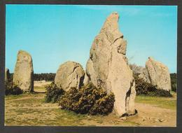 51 Ter - CARNAC - Les Menhirs De Kermario - Carnac