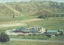 Modern Picture Postcard - New Zealand - Montana Wines, Marlborough - Unused - MPC 599 - Postcards
