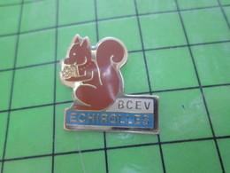 1615C Pin's Pins / Rare Et Belle Qualité THEME : ANIMAUX / ECUREUIL AVEC POMME DE PIN ECHIROLLES BCEV - Animals