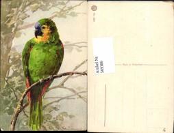 569386,Künstler AK Catharina Klein Vogel Papagei - Vögel