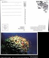 569805,Great Barrier Riff Orange Fairy Basslets Fische North Queensland Australia - Ansichtskarten