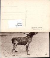569365,Hund Deutsch Kurzhaar Hunde Rasse Jagdhund - Hunde