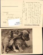 569376,Hunde Hund Pub Tierschutzverein - Hunde