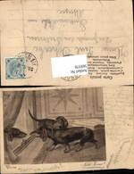 569378,Künstler AK Dackel Hund Hunde - Hunde