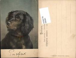 569381,tolle Künstler AK C. Reichert Hund Collie Pub Theo Stroefer 269-6 - Hunde
