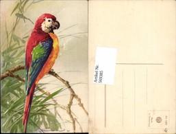 569385,Künstler AK Catharina Klein Vogel Papagei - Vögel