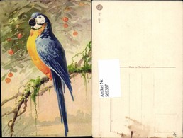 569387,Künstler AK Catharina Klein Vogel Papagei - Vögel