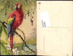 569388,Künstler AK Catharina Klein Vogel Papagei - Vögel