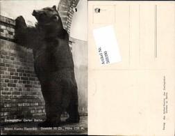 569390,Berlin Zoo Zoologischer Garten Bär Alaska Riesenbär - Bären