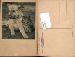 569391,Hund Und Katze  Österreichische Tierschutzverein - Hunde
