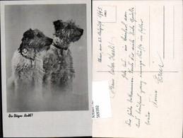 569392,Hunde Hund Collie - Hunde