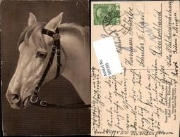 569393,Künstler AK Alfred Schönian München Pferd Pferdekopf - Pferde