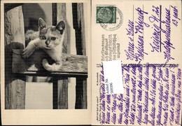 569396,M. Korschelt Katze - Katzen
