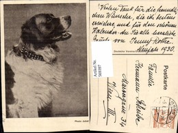 569397,Photo Jobst Hund Bernhardiner - Hunde