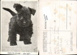 569399,Hund Rauhhaariger Terrier Pub Österreichischer Klub Rauhhaarige Terrier Wien - Hunde
