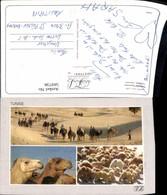 569738,Mehrbild Ak Tunisia Caravans Tunesien Kamele Tiere - Tunesien