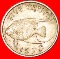 # FISH (1970-1985): BERMUDA ★ 5 CENTS 1970! LOW START ★ NO RESERVE! - Bermudes