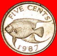 # FISH (1986-1998): BERMUDA ★ 5 CENTS 1987! LOW START ★ NO RESERVE! - Bermudes