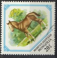 PIA  -1982 :  MONGOLIA  - Giovani Animali : Puledro - (Yv 1184) - Mongolia