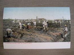 Tarjeta Postal - Postcard - Planting Sugar Cane In Puerto Rico - 1235 - Porto Puerto Rico - Antilles - Puerto Rico