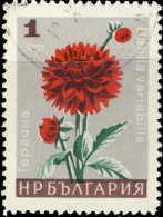 Bulgarie 1966. ~ YT 1475 - Dahlias - Bulgarie