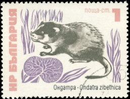 Bulgarie 1973. ~ YT 2008 - Rat Musqué - Gebraucht