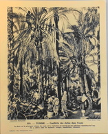 """TUNISIE - N°221 - Cueillette Des Dates Dans L'Oasis -Collection """"Pour L'Enseignement Vivant"""" - Colonies Françaises - TBE - Collections"""