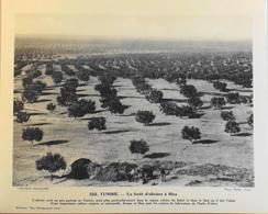 """TUNISIE - N°222 - La Forêt D'Oliviers à SFAX - Collection """"Pour L'Enseignement Vivant"""" - Colonies Françaises - TBE - Collections"""