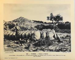 """TUNISIE - N°226 - Les Potiers à DJERBA - Collection """"Pour L'Enseignement Vivant"""" - Colonies Françaises - TBE - Collections"""