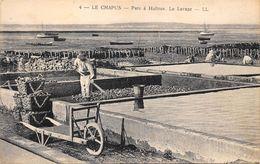 17-LE CHAPUS- PARC A HUITRES, LE LAVAGE - France