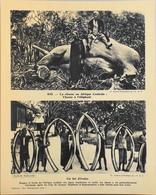"""AFRIQUE CENTRALE - N°243 Chasse à L'Eléphant - Collection """"Pour L'Enseignement Vivant"""" - Colonies Françaises - TBE - Collections"""