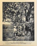 """AFRIQUE CENTRALE - N°247 Lianes à Caoutchouc - Collection """"Pour L'Enseignement Vivant"""" - Colonies Françaises - TBE - Collections"""