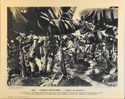 """GUINEE FRANCAISE - N°248 Culture De Bananiers - Collection """"Pour L'Enseignement Vivant"""" - Colonies Françaises - TBE - Collections"""