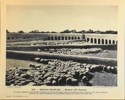 """SOUDAN FRANCAIS - N°249 Bergerie D'EL OUALADJI - Collection """"Pour L'Enseignement Vivant"""" - Colonies Françaises - TBE - Collections"""