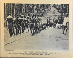 """GABON - N°254 Explotation Forestière - Collection """"Pour L'Enseignement Vivant"""" - Colonies Françaises - TBE - Collections"""